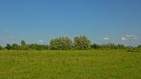 与树的晴朗的绿色领域在Kalkense Meersen自然reerve,富兰德,比利时 库存图片