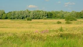 与树的晴朗的领域在Kalkense Meersen自然reerve,富兰德,比利时的清楚的蓝天下 库存照片