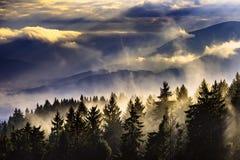 与树的有雾的风景 图库摄影