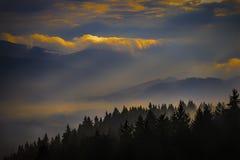 与树的有雾的风景 库存图片