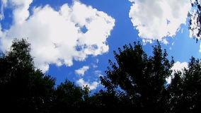 与树的有风天空 影视素材