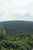 与树的样式的山风景 免版税库存照片