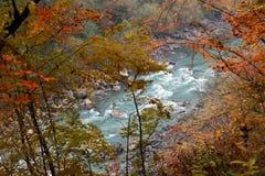 与树的河峡谷在黄色,红色,橙色五颜六色的叶子 库存图片
