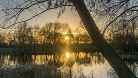 与树的浪漫日落 库存图片