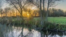与树的浪漫日落 库存照片