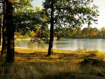 与树的湖边 免版税库存照片
