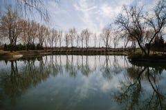 与树的湖lanscape 免版税库存图片