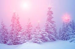 与树的神秘的冬天风景在圣诞灯发光 库存照片