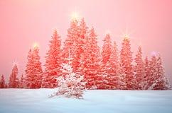 与树的神秘的冬天风景在圣诞灯发光 免版税库存图片