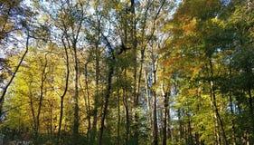 与树的秋天叶子在公园 库存图片