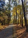 与树的秋天叶子在公园 免版税库存照片