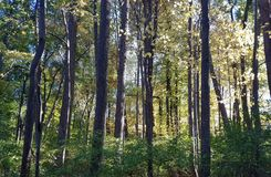 与树的秋天叶子在公园 免版税库存图片