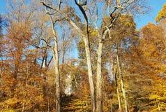 与树的秋天在公园 免版税库存照片