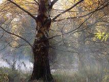 与树的秋天薄雾 免版税库存图片