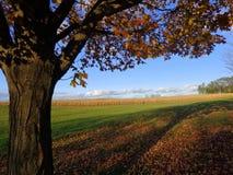与树的秋天风景 免版税库存照片