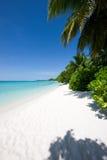 与树的美丽的热带海滩 免版税库存图片