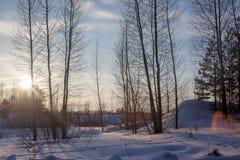 与树的美好的冬天日落在雪 暮色冬天日落在森林里 免版税库存图片