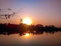 与树的美好的平衡的日落 免版税库存照片