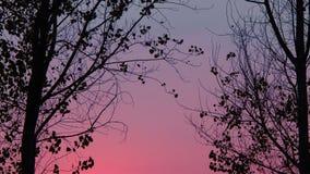 与树的美好的色的天空背景 免版税库存图片