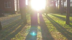 与树的美好的装饰的华丽家庭菜园路修筑树篱草 可爱的后院在一个晴天 免版税库存照片