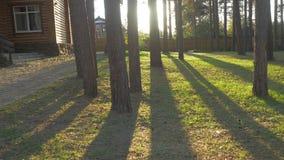 与树的美好的装饰的华丽家庭菜园路修筑树篱草 可爱的后院在一个晴天 库存图片