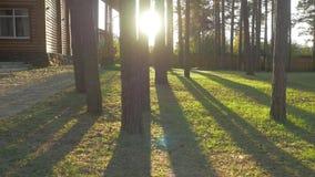 与树的美好的装饰的华丽家庭菜园路修筑树篱草 可爱的后院在一个晴天 图库摄影