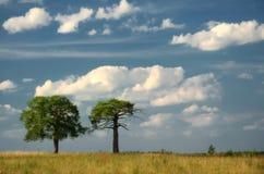 与树的美好的风景 库存图片
