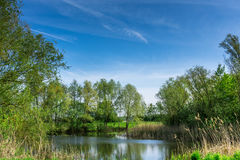 与树的自然保护区阳光的一个小湖 免版税图库摄影