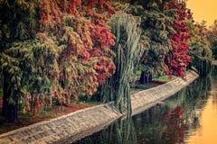 与树的葡萄酒神色在河岸的秋天 库存图片