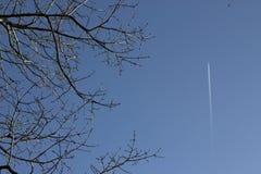 与树的蒸气足迹 库存图片