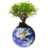 与树的行星地球在白色背景 免版税库存图片
