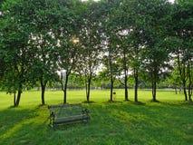 与树的铁长凳 库存照片