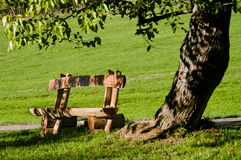 与树的长凳 免版税库存图片