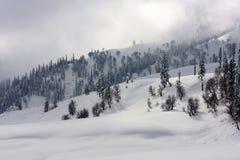 与树的雪scape在克什米尔 库存图片