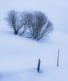 与树的领域在冬天 库存图片