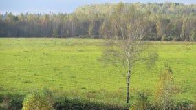 与树的领域草 免版税图库摄影