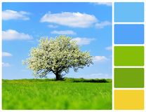 与树的风景与调色板颜色样片 图库摄影