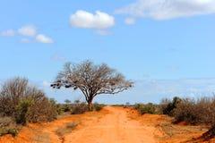 与树的风景在非洲 免版税库存照片