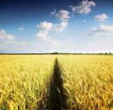 与树的麦田在距离 免版税库存照片