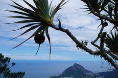 与树的巴西-里约风景 库存照片