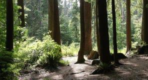 与树的Forrest风景在光、树荫和黑暗 库存图片