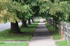 与树的Sidwalk 免版税库存照片