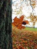 与树皮和黄色叶子装饰背景纹理的宏观照片  免版税图库摄影