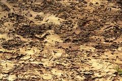 与树皮甲虫踪影的抽象背景 库存照片