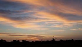与树草和蓝天的Kalahati日落 库存照片