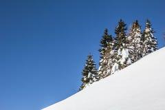 与树雪和蓝天的冬天风景 免版税库存图片