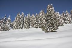 与树雪和蓝天的冬天风景 免版税库存照片