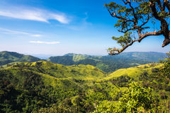 与树brance的山景  免版税库存照片