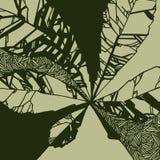与栗子叶子的例证  免版税图库摄影