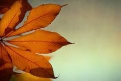 与栗子叶子的秋天背景  免版税库存图片
